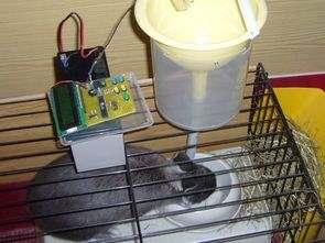 Otomatik tavşan besleme sistemi ATmega8 Pascal