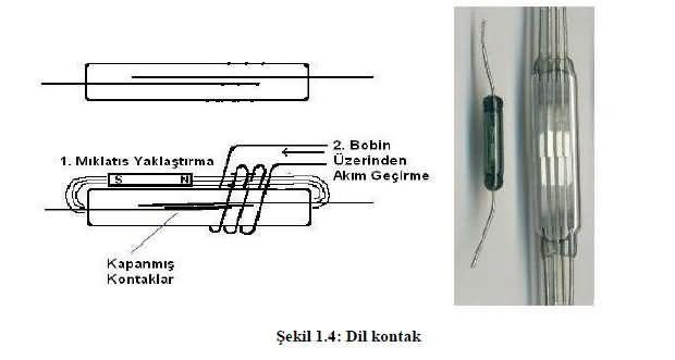 dil-kontak-roleler